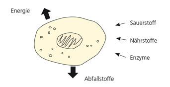 Umwandlungsprozess in der Zelle
